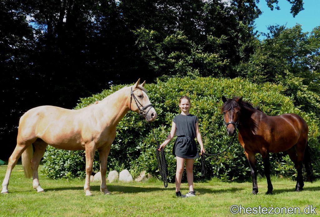 hest eller pony hvad er forskellen