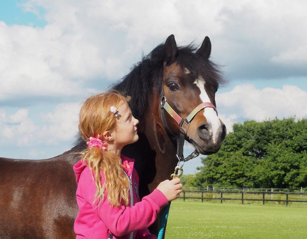 hest-heste- ridning- pony